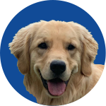Storage Business Owners Alliance Mascot Dog golden retriever called Sandy B